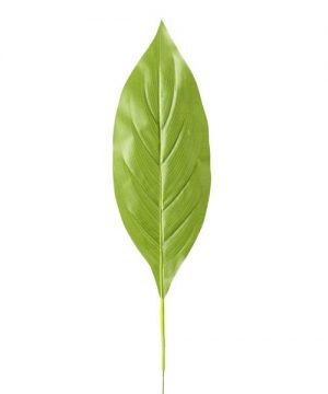 "Artificial Tropical Leaves - 6"" x 25"" - 48 Leaves - Light Green"