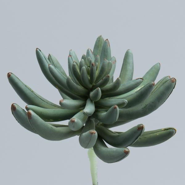 Decostar Succulents - 24 Pieces