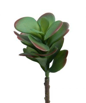 """Decostar Succulents 7½"""" - 24 Pieces - Green"""
