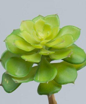 """Decostar Succulents 8"""" - 24 Pieces - Green"""